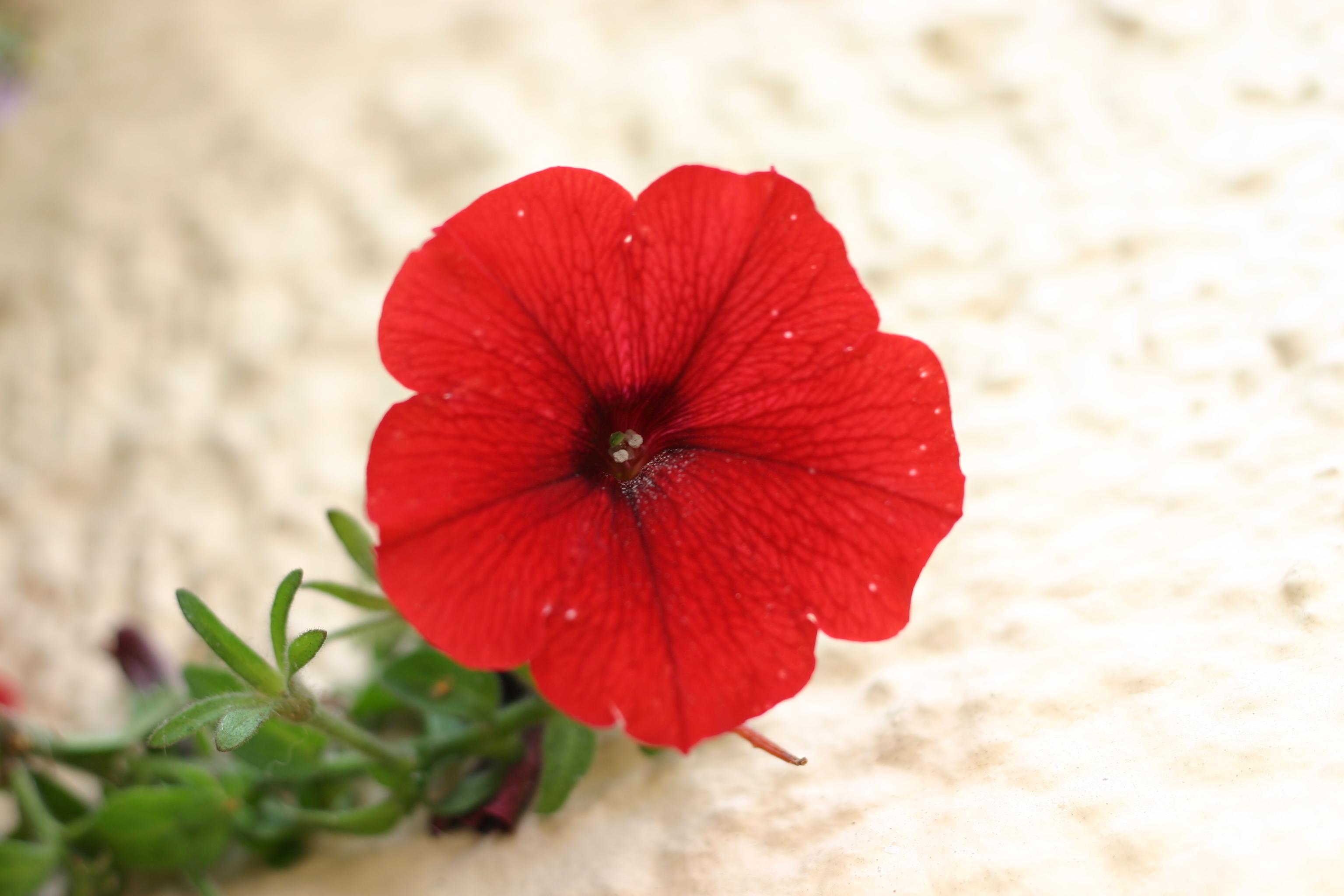 "16th August 2012 ""Flower"""