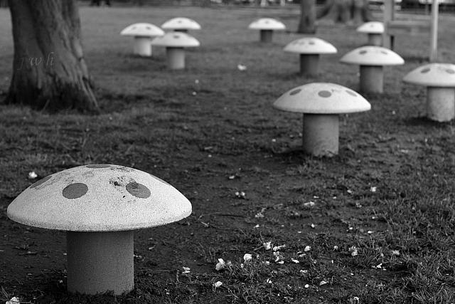"11th May 2012 - ""Mushrooms"""