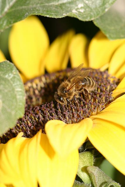 "8th September 2012  - ""Bee, happy"""