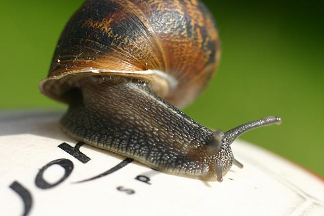 "9th September 2012 - ""Snail's Pace"""