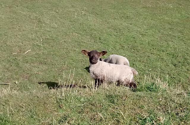 "13th March 2014 - ""Ewe Looking At Me?"""