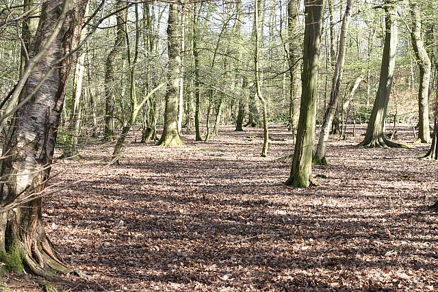 "12th April 2014 - ""Hookstone Woods"""