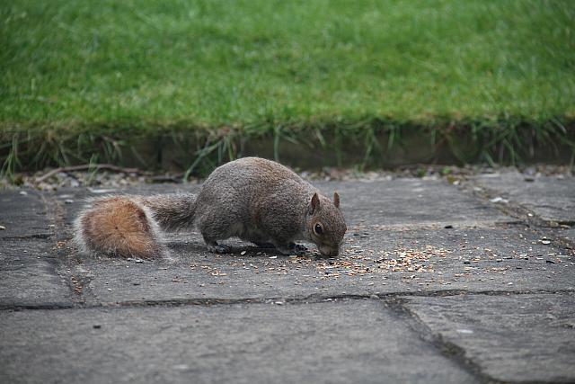 "19th May 2015 - ""Squirrel"""
