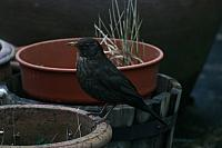 "28th February 2012 - ""Blackbird"""