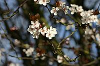 "8th March 2012 - ""Blossom"""