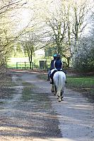 "11th March 2012 - ""Hookstone Horses"""