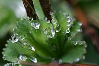"20th April 2012 - ""Droplets"""