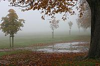 "21st October 2012 - ""Misty"""