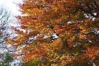 "2nd November 2012 - ""Autumn"""