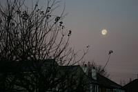 "30th November 2012 - ""Morning Moon"""