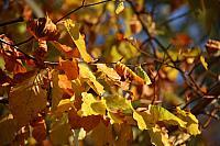 """31st October 2018- """"Autumn"""""""