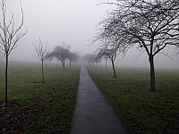 "21st December 2019 - ""Foggy Stray"""